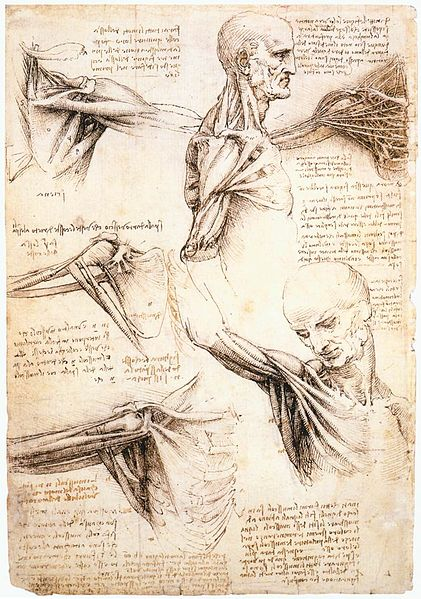 421px-Leonardo_da_Vinci_-_Anatomical_studies_of_the_shoulder_-_WGA12824